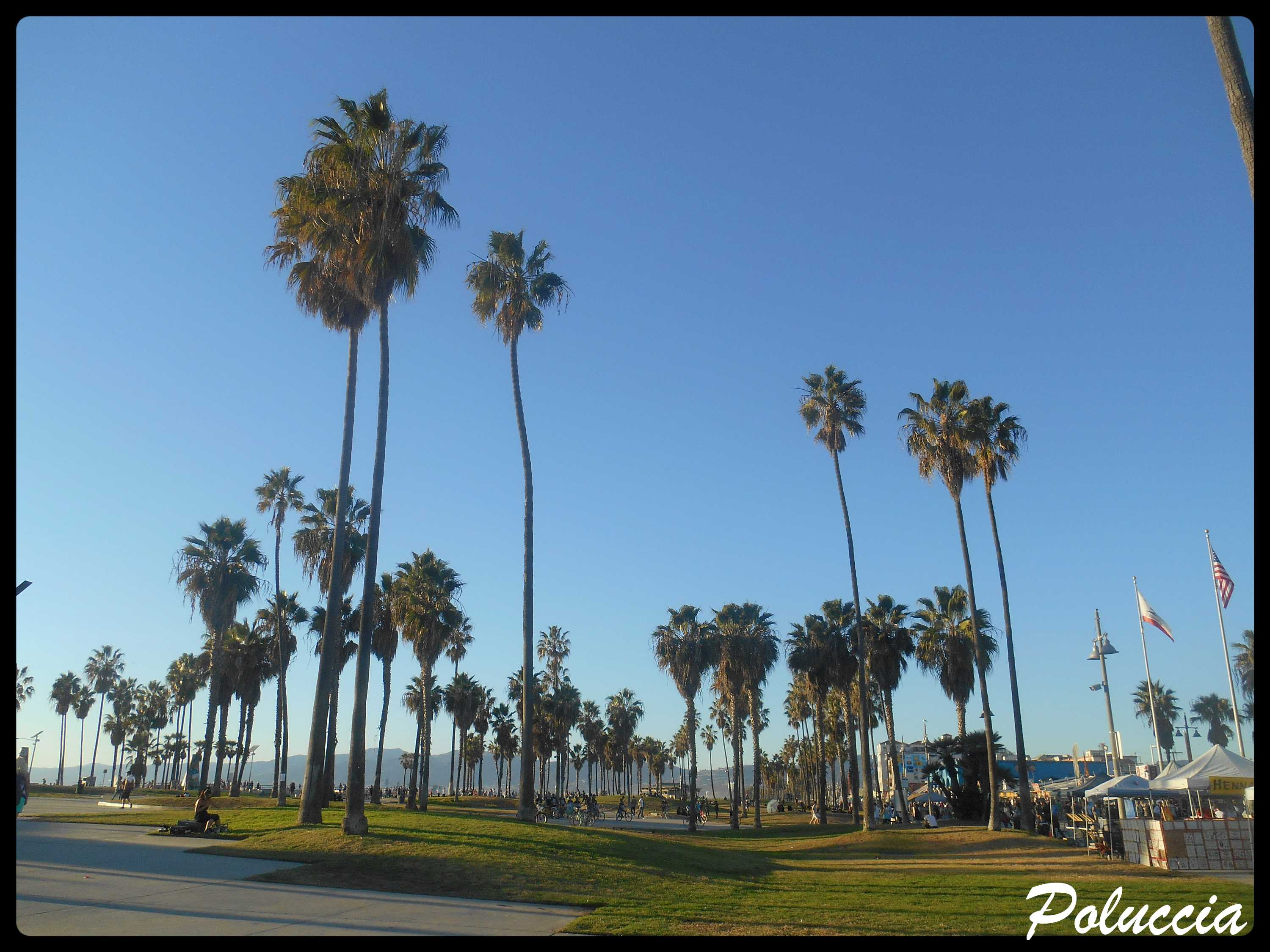 New Image VENICE BEACH F