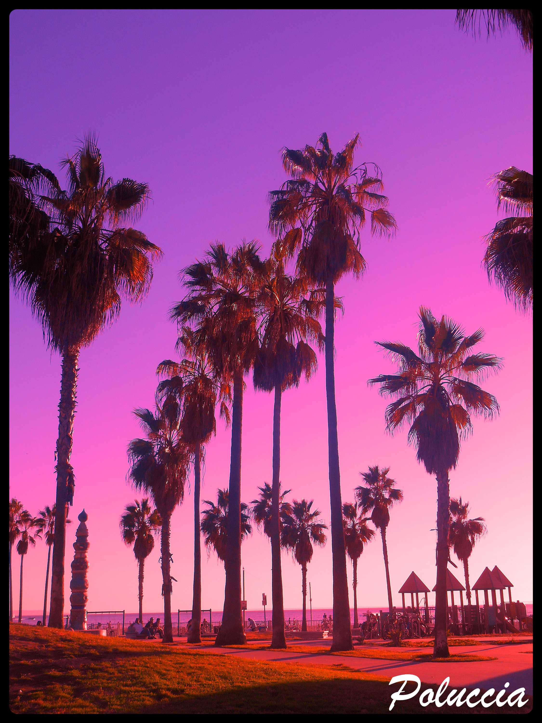 New Image VENICE BEACH K