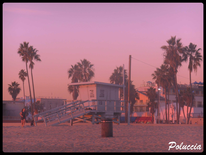 VENICE BEACH Q
